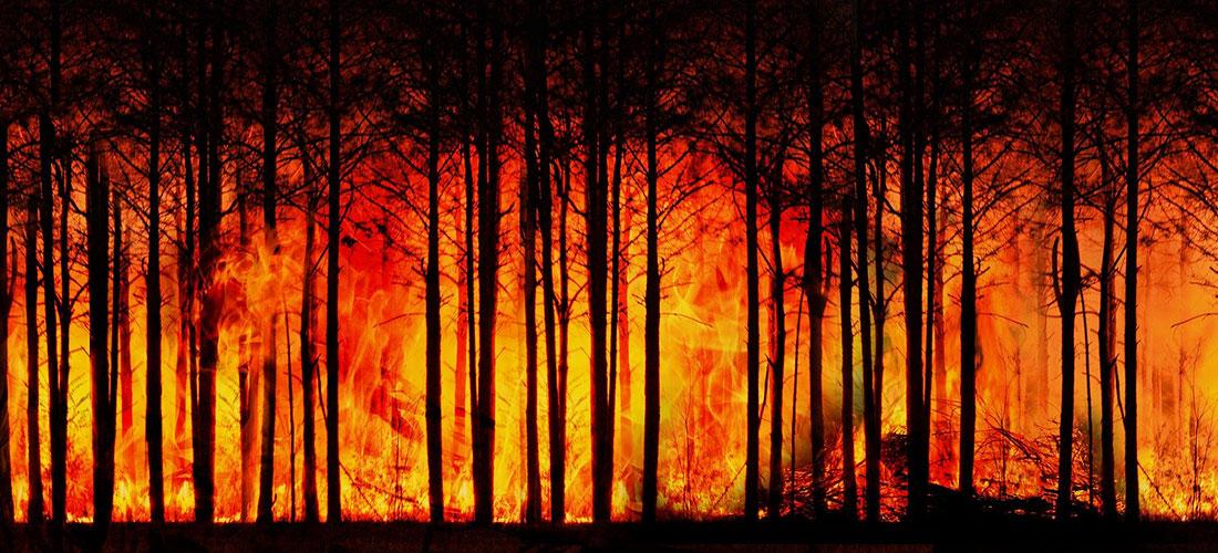 das Foto zeigt ein großes Feuer und brennende Bäume.